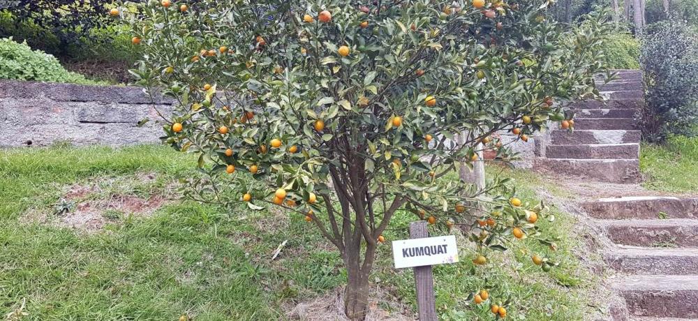 Viver em Contato com a Natureza - Condomínio Blumen Haus em Nova Petrópolis / Serra Gaúcha