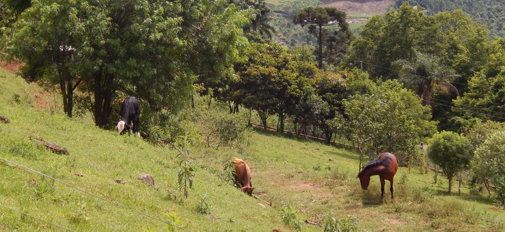 Hospedaria para Cavalos e Potreiro do Condomínio Blumen Haus em Nova Petrópolis / Serra Gaúcha